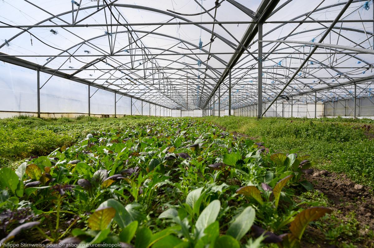 Serre en agriculture périurbaine