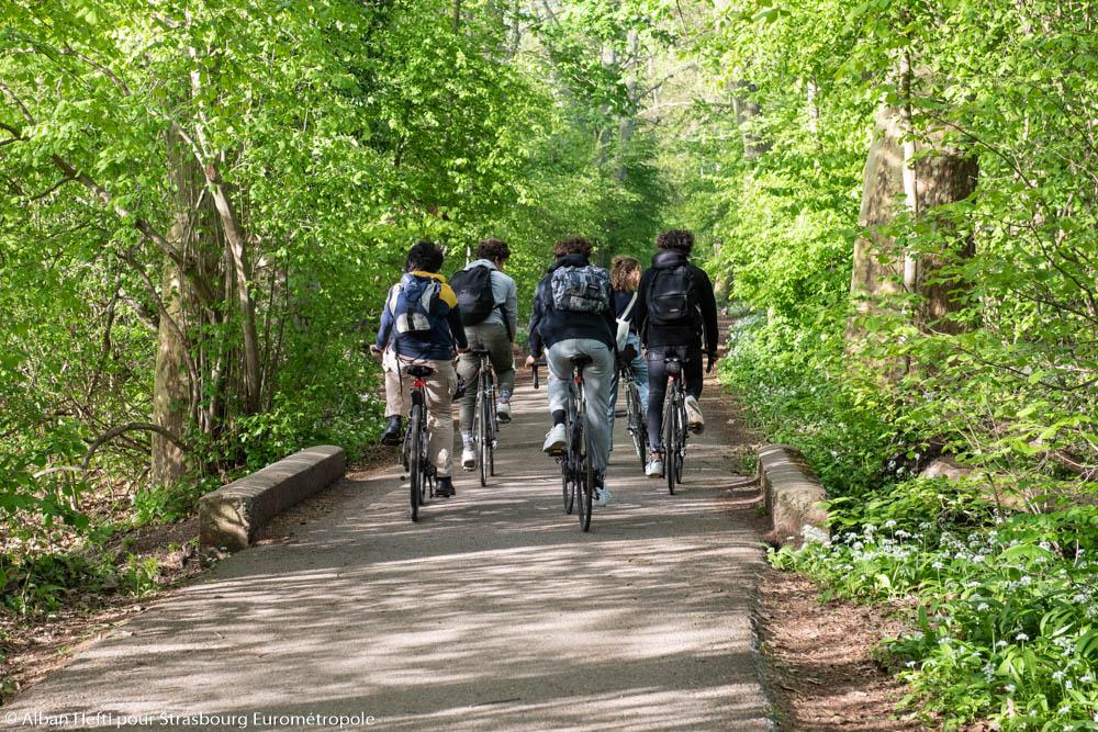 Groupe de personne à vélo sur une piste cyclable en forêt